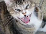 Yawn, Tiger.