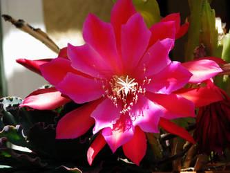 Enter the cosmic cactus pt2