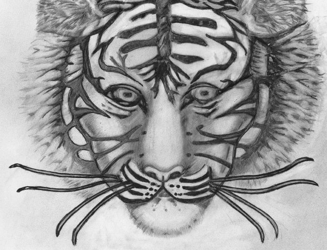 Tiger Face by Denzil007