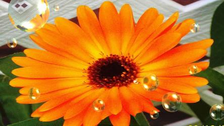 Orange Goodness