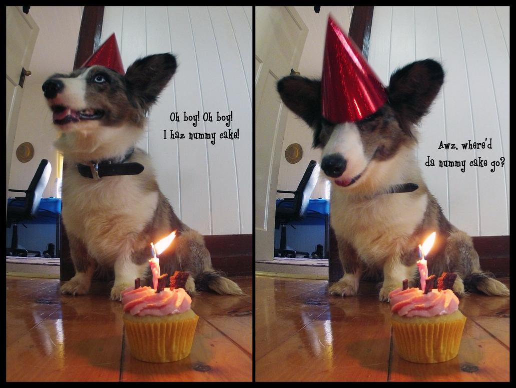 funny animal meme happy birthday
