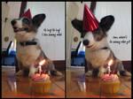 Birthday Corgi