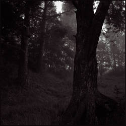 Dark Wood by Koptelov