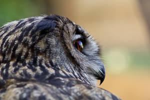 The owl's eye by zerakiel