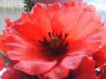 Giant red flower loves you