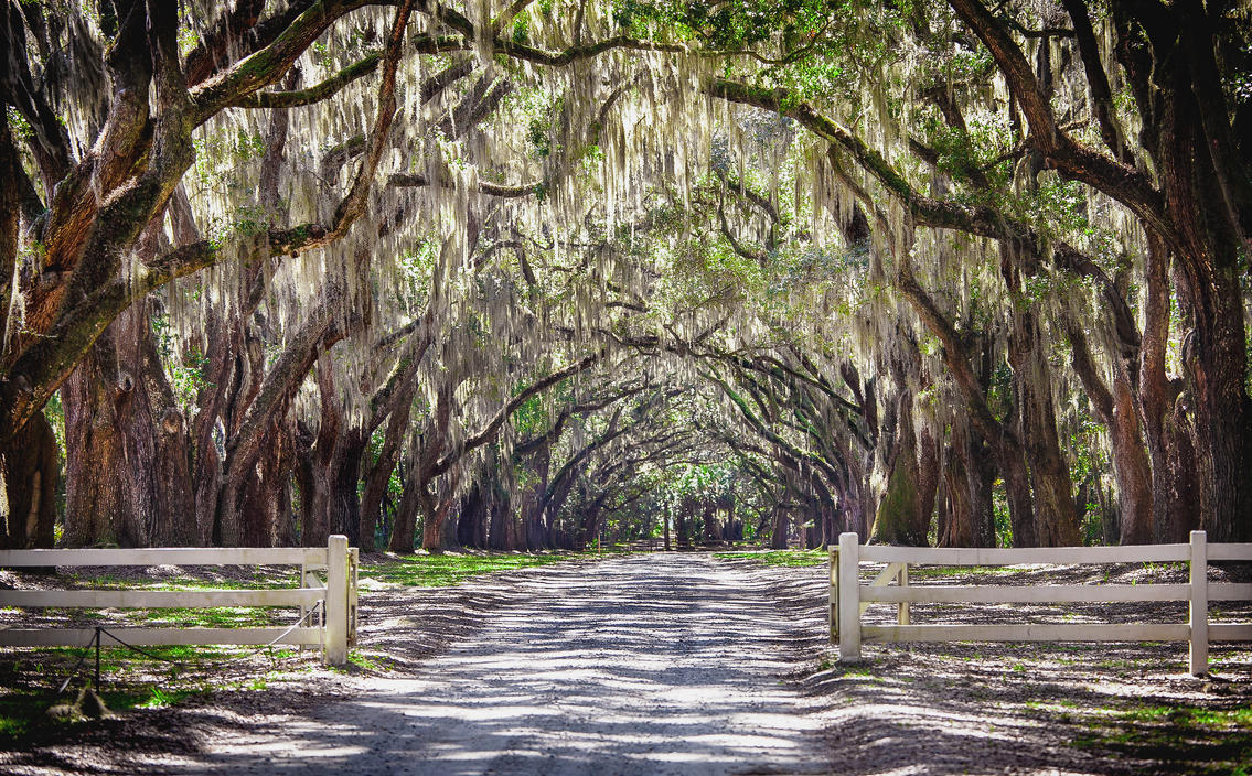 Wormsloe Plantation By Rctfan2 On Deviantart