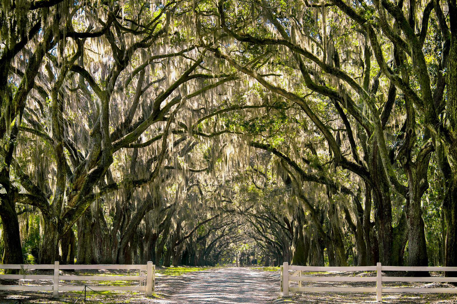 Charleston Fall Tour Of Homes