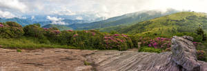 Jane Bald Panorama by rctfan2