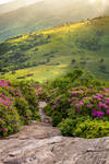 Appalachian Trail Crosses over Jane Bald