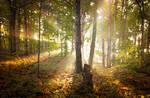 Rays by rctfan2