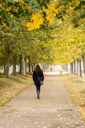 Walking in Autumn