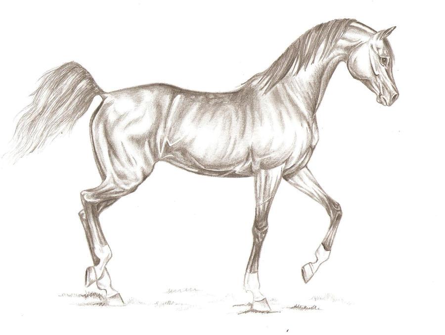 Running arabian horse drawing - photo#6