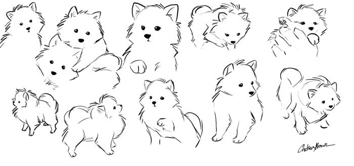 pomeranian concept sketches by spiritwolf77