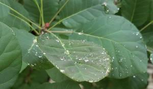 Raindropped 3