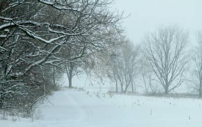 Winter Snowmobile Path