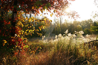 Prarie Field in Fall