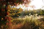 Prairie Field in Fall