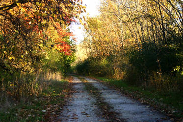Secluded Horse Path