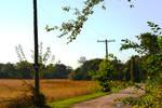 Local Farm Road (Fall 2020)