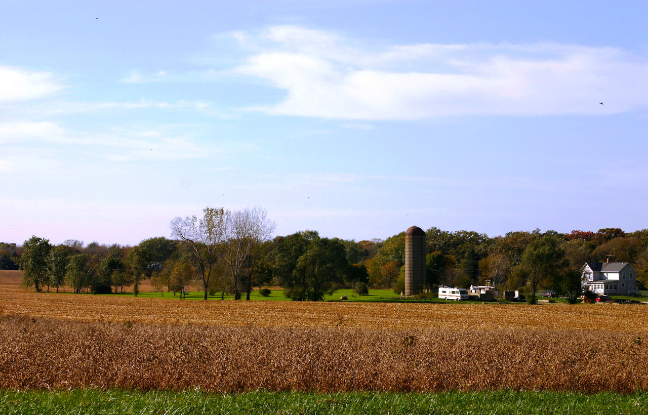 Fall Harvest (Fall 2020)