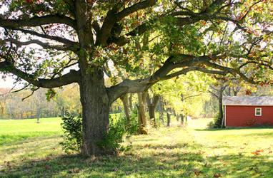 Ye Olde Tree (Fall 2020)
