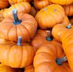 Pumpkin 4 (2020)