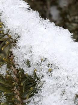 Snowy Tree 6