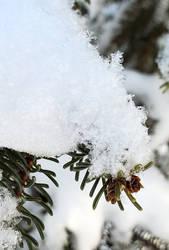 Snowy Tree 4