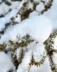 Snowy Tree 2