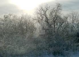 Late Winter 2 (2019)