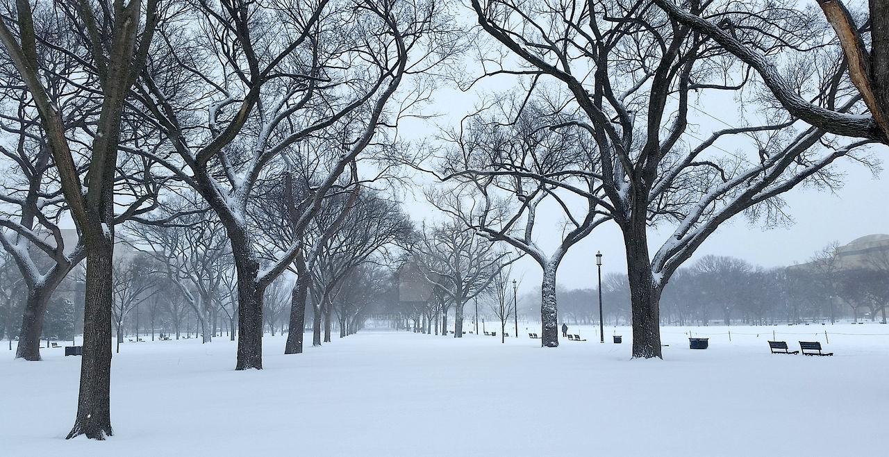 Snowmageddon 5 (2016)