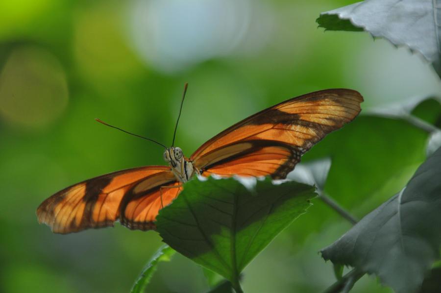 butterfly XVI by little-snow-flake-7