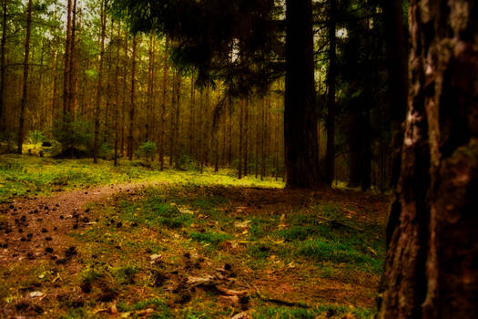 Forest magic III