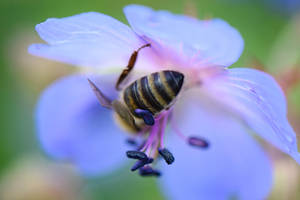 Busy bee IV
