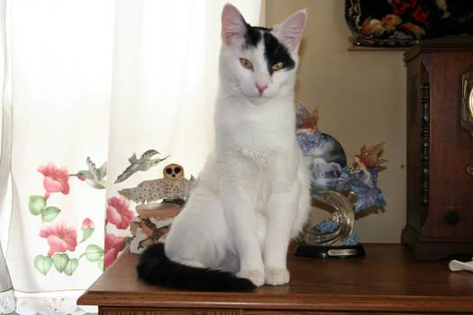 Photo of my cat