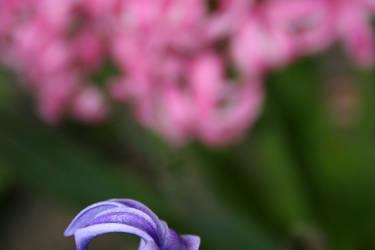 Purple flower..