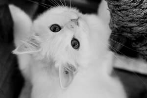 Tommy by stillnessphotography