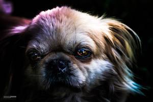 Stock-photo-the-dog-2-110594403