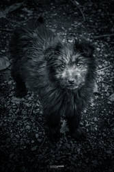 Stock-photo-the-unknown-doggy-108805191