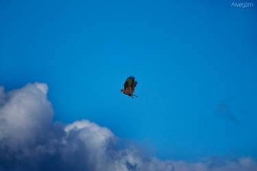 Buzzards Prey