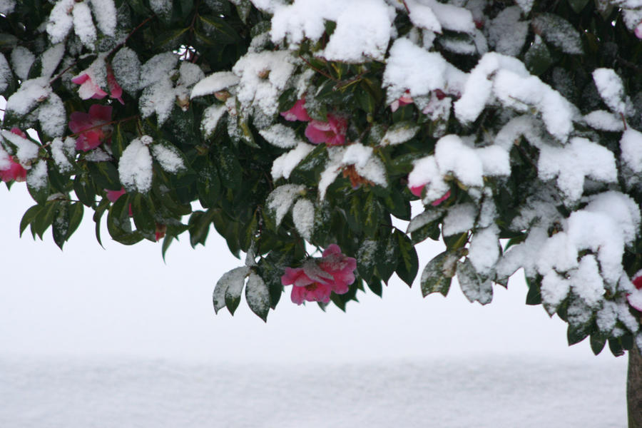 Camelia's hiding in the snow by Mortitia212