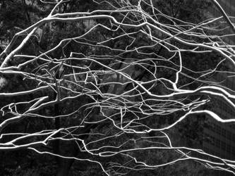 City Park Branches 2 by peterkopher