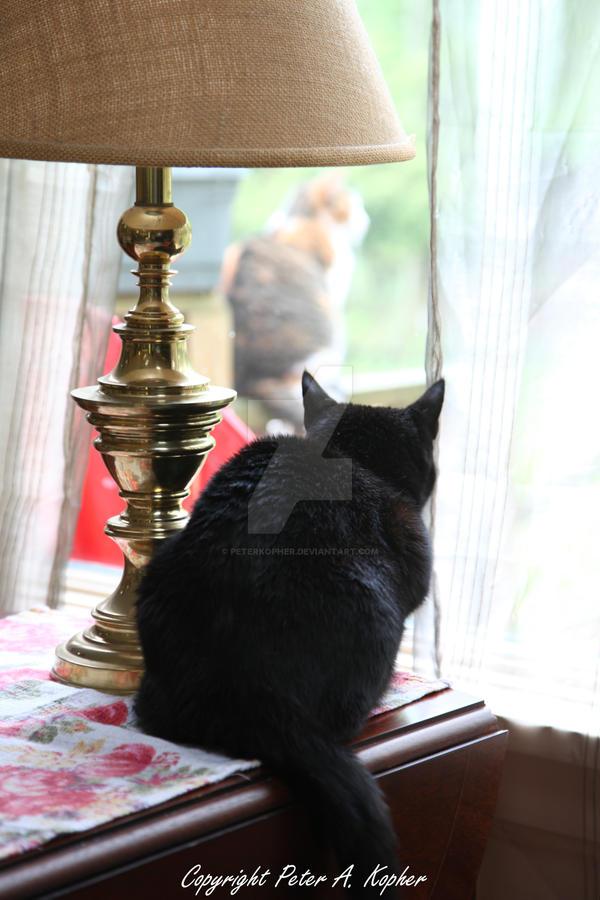 Cassie watching Sadie by peterkopher