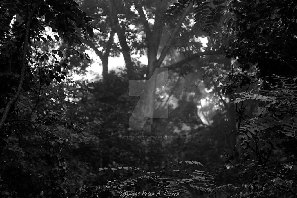 Fog Framed By Foliage B+W by peterkopher