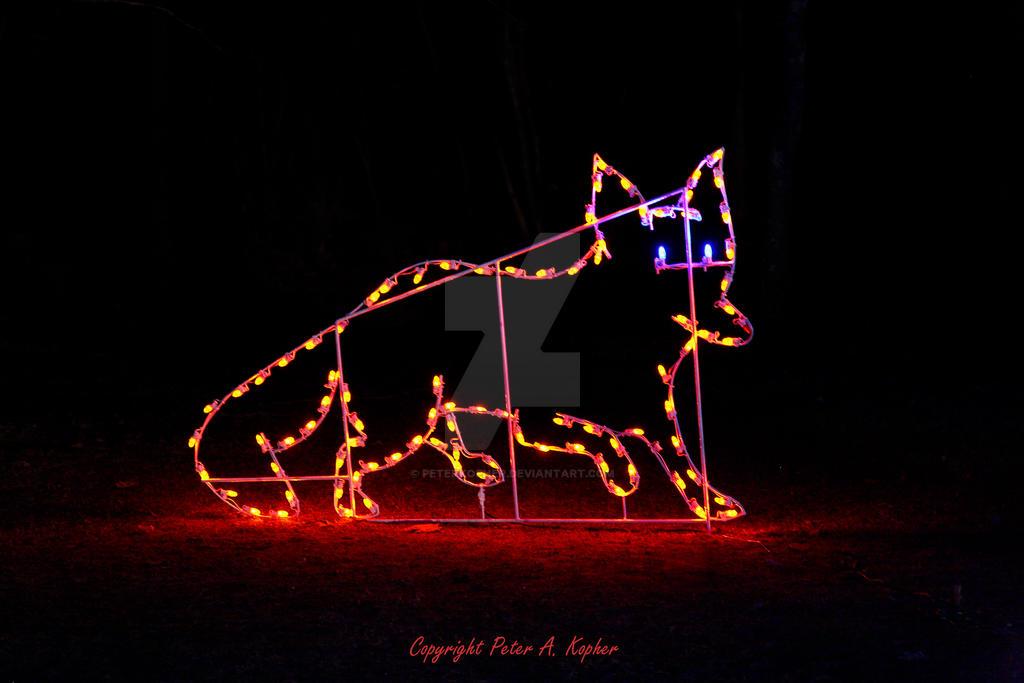 Fox Display by peterkopher