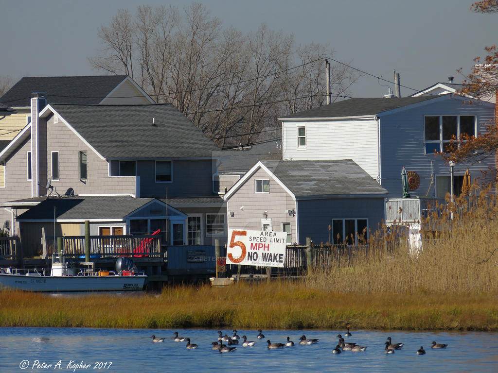 Brant, in Compliance  by peterkopher