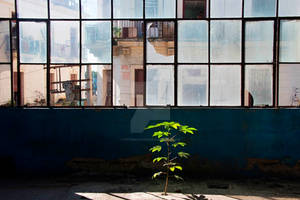 A Tree Grows In A Factory