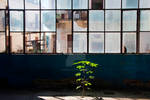 A Tree Grows In A Factory by peterkopher