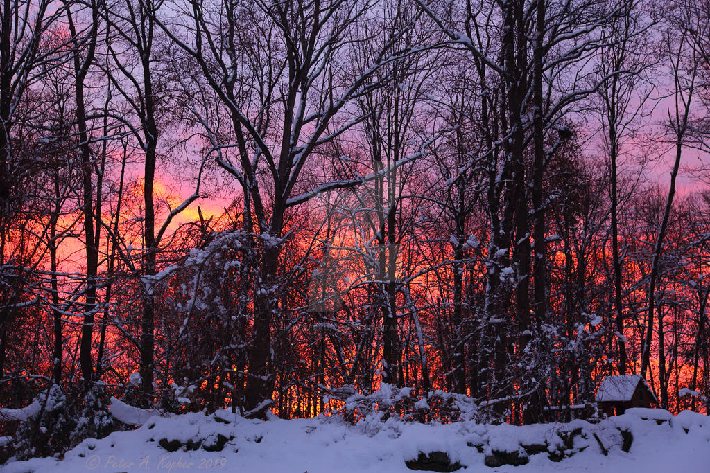 Backyard Technicolor Sunrise by peterkopher
