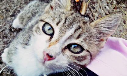 eyes by Elvira15